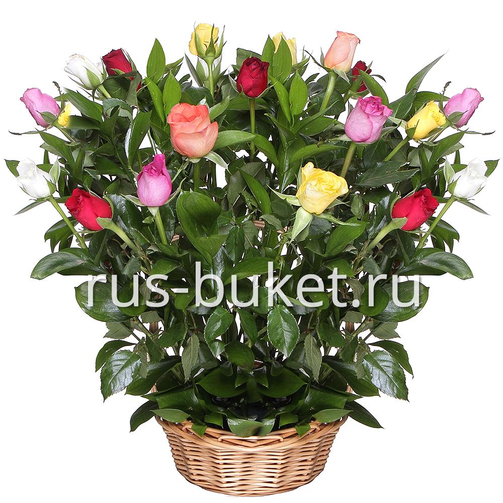 Доставка роза санкт-петербург